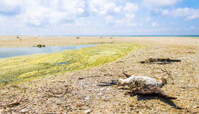 Cientistas alertam de que a Terra está ameaçada por uma extinção global