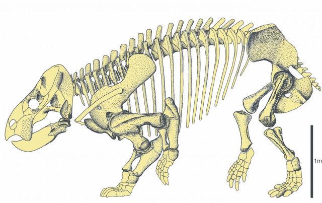 Descobrem um muito antigo ancestral do ser humano que tinha o tamanho de um elefante